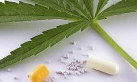 Cannabis på recept mod opioidafhængighed